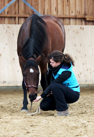 Pferd senkt auf Signal den Kopf