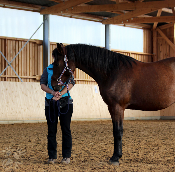Pferd steht höflich neben Mensch mit Futtertasche