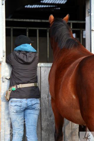 Pferd und Mensch sehen gemeinsam durch ein Fenster