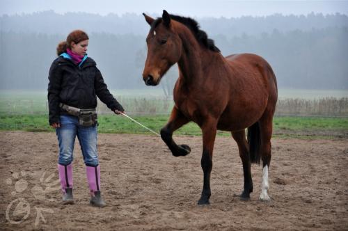 pferd hufe geben beibringen