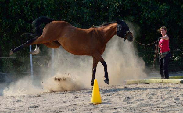 Buckelndes Pferd an der Longe
